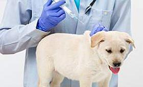 Köpekler ve Aşıları